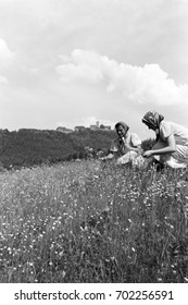 Women picking wildflowers in meadow