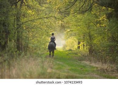Women riding a horse in a nature reserve