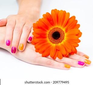 Women s hands with orange gerbera flower