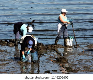 women shellfishers, seafood seekers, collecting seafood, in the Ferrol estuary, A Coruña, Galicia, Spain, Europe, in search of clams, cockles in the mud. hard work, miserable, exhausting, engine,