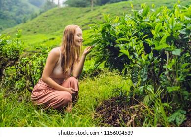 Women tourist at a tea plantation. Natural selected, Fresh tea leaves in tea farm in Cameron Highlands, Malaysia. Ecotourism concept