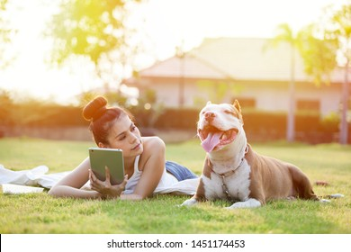 Women using tablet in the park on the grass with pitbull dog at sunset