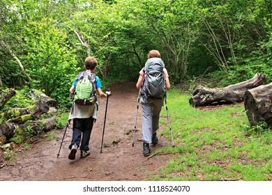 women walking in the forest