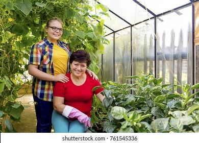 Women working in a greenhouse