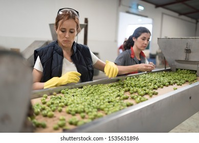Women working in olives warehouse factory selecting best and bigger fruits for sale