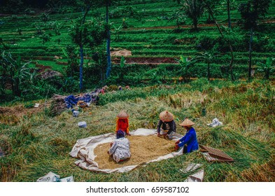 Women working on rice field, Java
