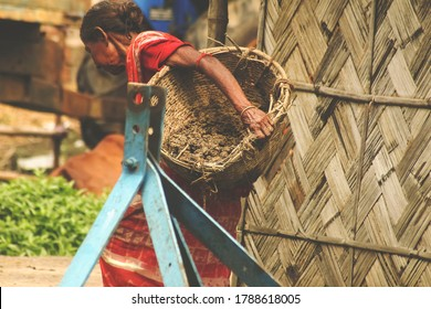 Women working on a sunny day. Old aged lady. Carrying a wooden/bamboo made basket on his lap with soil. Against a blurry wooden huts,house. Wearing a red colorful saree with coloured blouse. Copyspace
