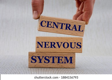 Women's hand folds wooden bars with words CENTRAL NERVOUS SYSTEM . Medical concept