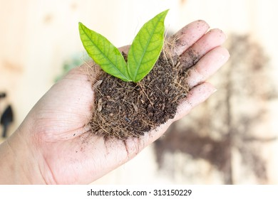 Women's hand are planting trees
