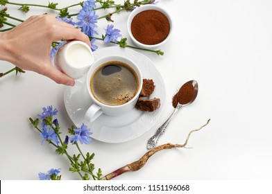Women's hand pouring milk into a cup of chicory coffee. Instant chicory root roasted powder, muscovado sugar and fresh chicory flowers. Overhead close up view with copy space on white background