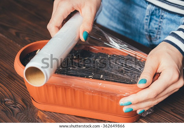 Women's hands with bright manicure is covered of plastic wrap seeds and soil in a pot for growing plants