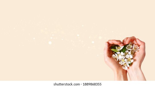 Women's hands with heart-shaped palms and white apple blossoms on a champagne pink background. spring time, love, tenderness. skin care, natural cosmetics. Banner, space for text