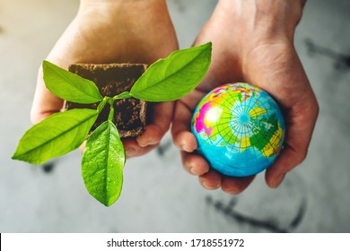 Women's hands hold a green sprout of a tree sapling in one hand and a globe of earth in the other. Concept of the ecology of the planet and protect the environment
