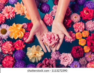 Women's hands holding a lovely pink rose on the background of fresh colorful flowers in the water, top view. The concept of relaxation and Spa care.