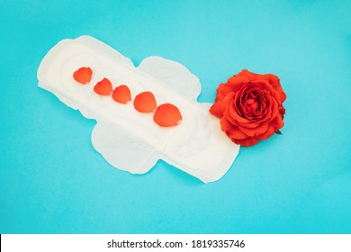 Women's padding with red rose petals on a blue background.Medical photography concept.Gynecological menstrual cycle. Women's hygiene during critical days.