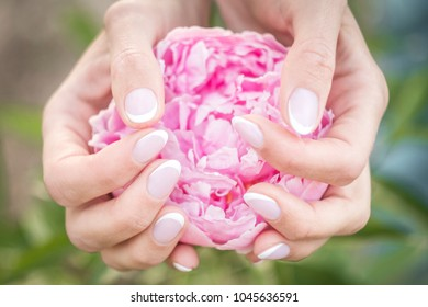 Women's wrists with an elegant French manicure, holding a large pink flower in their hands.