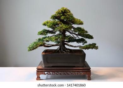 wonderful art of bonsai world