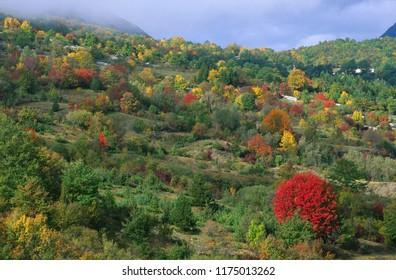 wonderful autumn forest