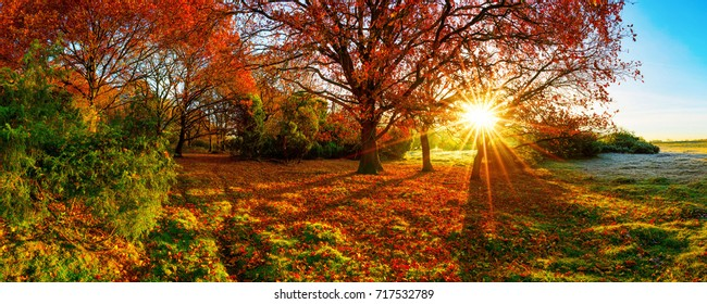 Wonderful autumn landscape with bright sun, colorful trees and wide meadows
