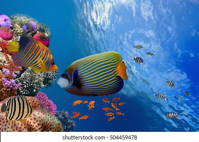 Wonderful and beautiful underwater world with corals and tropical fish, Red Sea, Egypt.