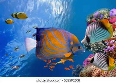 Wonderful and beautiful underwater world with corals and tropical fish, Red Sea