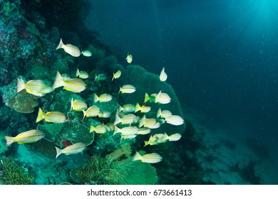 Wonderful and beautiful underwater world with corals, fish and sunlight