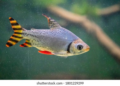 Wonderful and beautiful underwater world with  tropical fish.