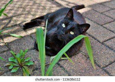 wonderful black cat