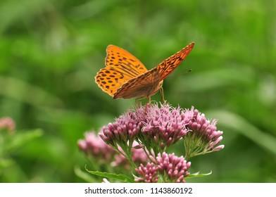 Wonderful butterfly detail, sitting on a flower.