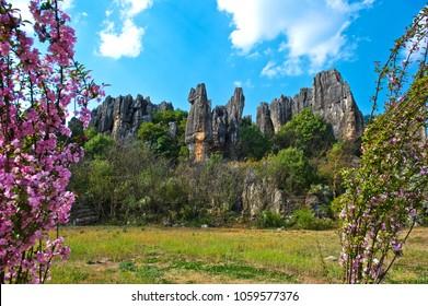 Wonderful and curious Naigu limestone forest.Unesco world heritage.