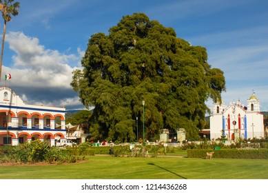 Wonderful day on Santa María del Tule, Oaxaca, Mexico. Town hall, Tule tree and Virgin Mary of the Assumption Temple.