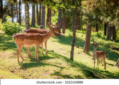 Wonderful deers in forest in sunny summer, Europe