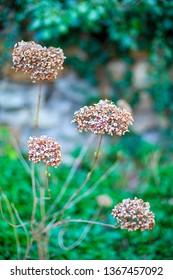 Wonderful dried flowers. Close-up with blurred background.