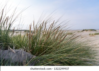 Wonderful dune beach landscape on the North Sea island Langeoog in Germany with  sand and grass on a beautiful summer day, holidays in Europe.