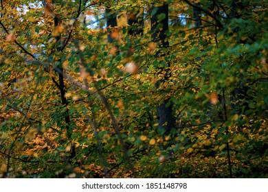 Wunderbarer märchenhafter Herbsttag mit bunten Blättern und Wäldern