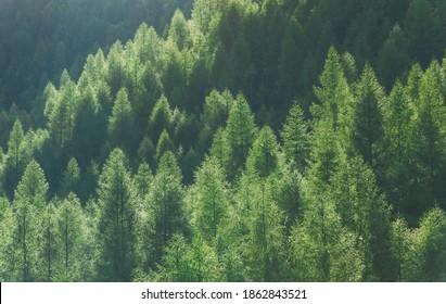 Wonderful forest landscape. The sun illuminates the trees. Morning scene. Beauty in nature. Peaceful scenery.