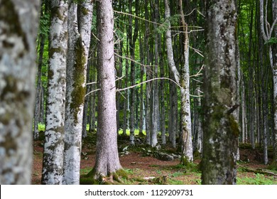 a wonderful and fresh spring in the forests