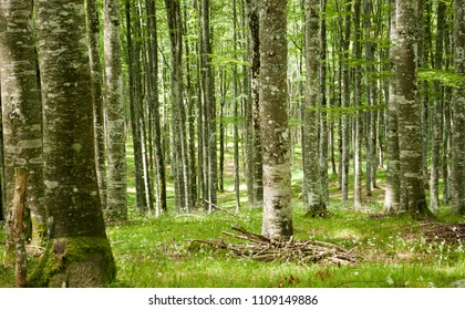 The wonderful green of the forests in spring