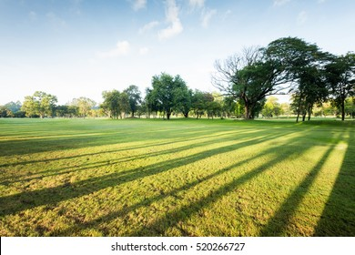 Wonderful green park landscape in the morning with blue sky,  Beautiful green grass with sunlight in the morning
