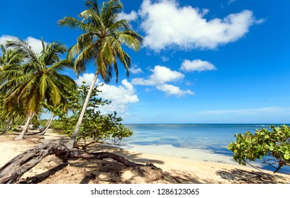 Wonderful holiday on beautiful and lonely sandy beach in a paradise on Samana, Dominican Republic  in the Caribbean with palms, sky, ocean and clouds, mangroves and beautiful clear water in the ocean