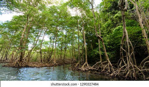 Wonderful holiday on beautiful and lonely lagoon in a paradise on Samana, Dominican Republic  in the Caribbean with mangroves and beautiful clear water