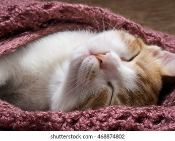 Wonderful kitten is fast asleep under the lilac knitted blanket