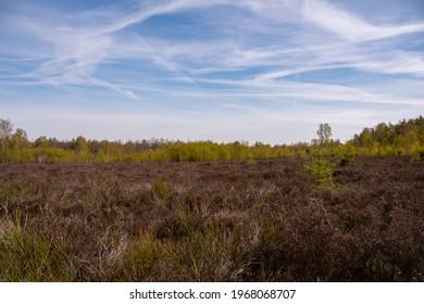 Wonderful landscape in the Drover Heide nature reserve