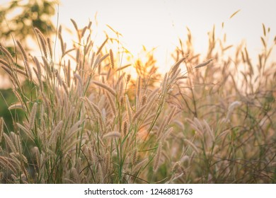 Wonderful landscape from the feather grass field in the evening sunset silhouette. serene feeling concept. countryside scenery atmosphere. image for background, wallpaper and copy space.