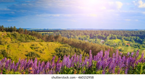 wonderful landscape. Majestic mountain landscape with lupine blooming on a sunny day. picturesque scene. breathtaking scenery. wonderful landscape. soft light effect