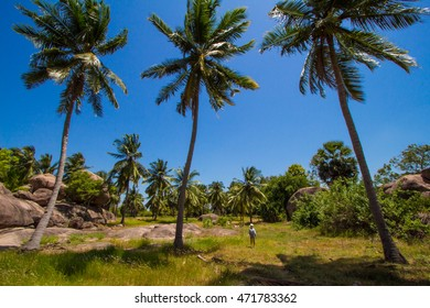 Wonderful landscape with a palm