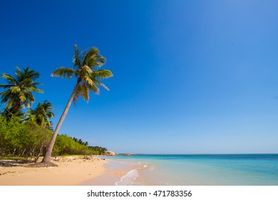 Wonderful landscape with palm on a tropical beach