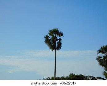 Wonderful morning blue sky with palm tree