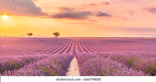 Wonderful nature landscape, amazing sunset scenery with blooming lavender flowers. Moody sky, pastel colors on bright landscape view. Floral panoramic meadow nature in lines with trees and horizon