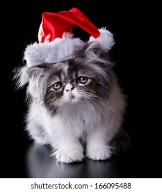 Wonderful persian cat with Santa Claus hat, perfect for illustrating Christmas. On black background.